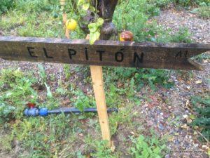 el-piton-a1