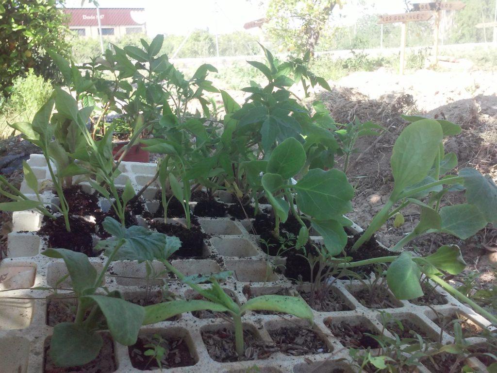 Semillero listo para plantar